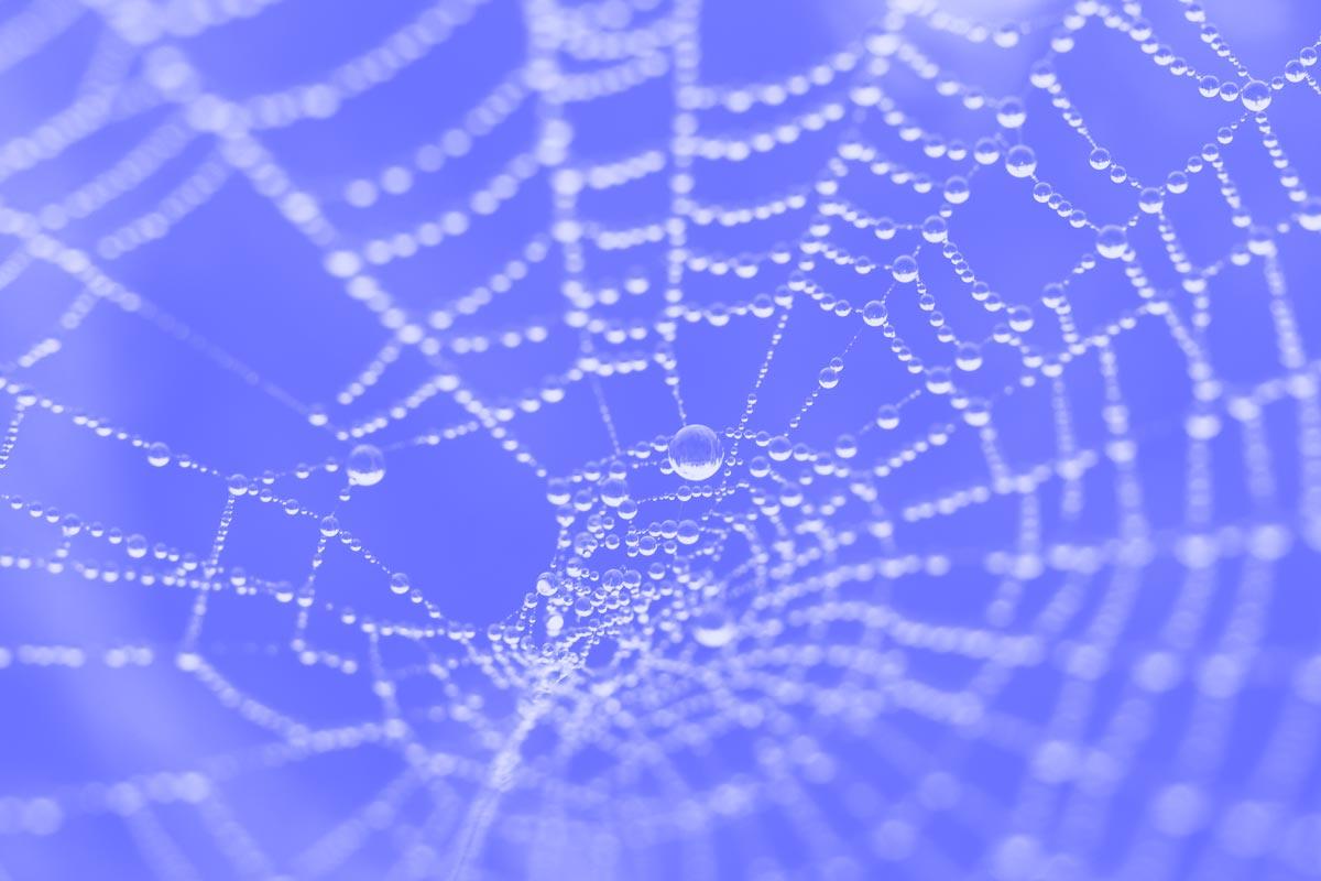 Fotografia de uma teia-de-aranha alusiva aos conceitos de world wide web e RSS